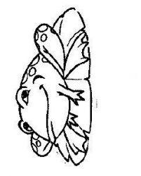 plansa de colorat animale broscute de colorat p94