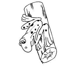 plansa de colorat animale broscute de colorat p99