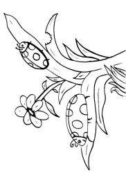 plansa de colorat animale buburuze de colorat p09