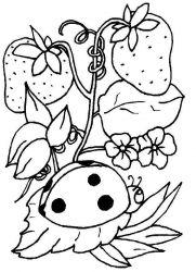 plansa de colorat animale buburuze de colorat p15
