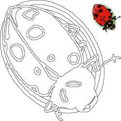 plansa de colorat animale buburuze de colorat p19