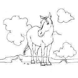 plansa de colorat animale cai de colorat p14