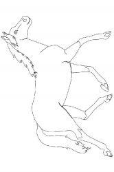 plansa de colorat animale cai de colorat p18