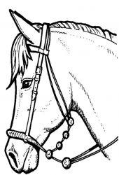 plansa de colorat animale cai de colorat p19