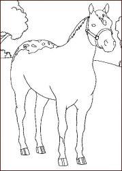 plansa de colorat animale cai de colorat p25