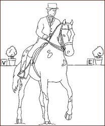plansa de colorat animale cai de colorat p27