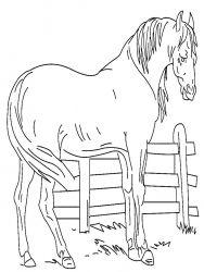 plansa de colorat animale cai de colorat p29
