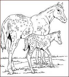 plansa de colorat animale cai de colorat p38