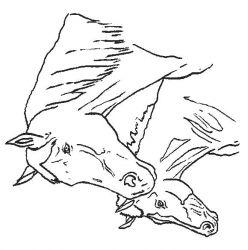 plansa de colorat animale cai de colorat p43