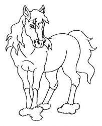 plansa de colorat animale cai de colorat p50