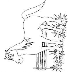 plansa de colorat animale cai de colorat p81