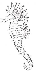 plansa de colorat animale caluti de mare de colorat p19