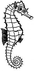 plansa de colorat animale caluti de mare de colorat p22