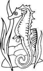 plansa de colorat animale caluti de mare de colorat p28