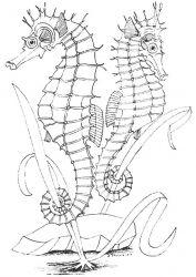 plansa de colorat animale caluti de mare de colorat p33