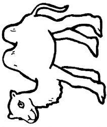 plansa de colorat animale camile de colorat p07