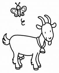 plansa de colorat animale capre de colorat p10