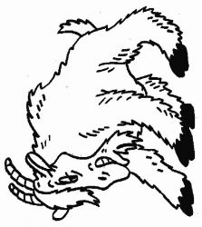 plansa de colorat animale capre de colorat p13