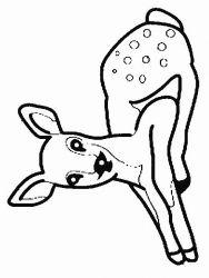 plansa de colorat animale caprioare de colorat p01