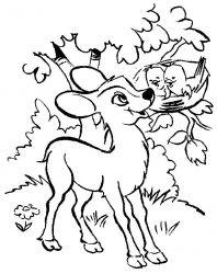 plansa de colorat animale caprioare de colorat p02