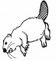 plansa de colorat animale castori de colorat p01