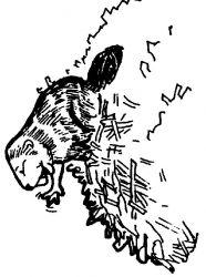 plansa de colorat animale castori de colorat p12