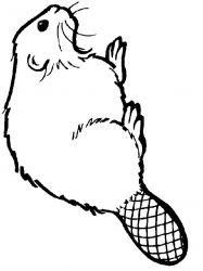 plansa de colorat animale castori de colorat p14