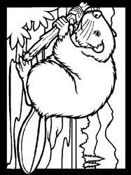 plansa de colorat animale castori de colorat p15
