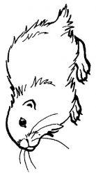 plansa de colorat animale cobai de colorat p01