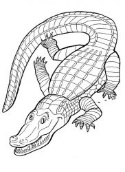 plansa de colorat animale crocodili de colorat p09