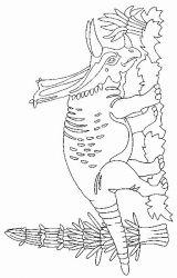 plansa de colorat animale dinozauri de colorat p44