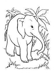 plansa de colorat animale elefanti de colorat p08