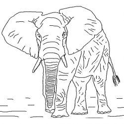plansa de colorat animale elefanti de colorat p13
