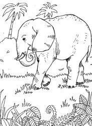 plansa de colorat animale elefanti de colorat p24