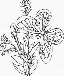 plansa de colorat animale fluturasi de colorat p01