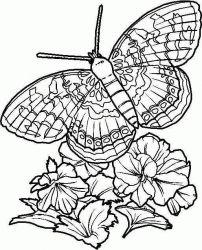 plansa de colorat animale fluturasi de colorat p05
