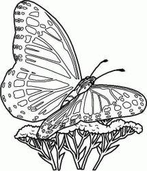 plansa de colorat animale fluturasi de colorat p07