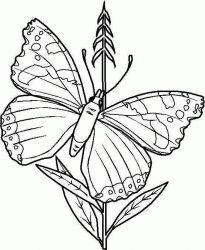 plansa de colorat animale fluturasi de colorat p09