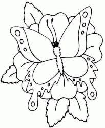 plansa de colorat animale fluturasi de colorat p12