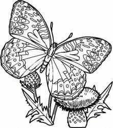 plansa de colorat animale fluturasi de colorat p14