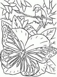 plansa de colorat animale fluturasi de colorat p16