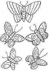 plansa de colorat animale fluturasi de colorat p21
