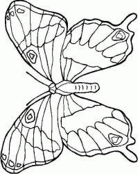 plansa de colorat animale fluturasi de colorat p24