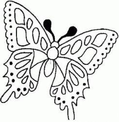 plansa de colorat animale fluturasi de colorat p26