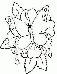 plansa de colorat animale fluturasi de colorat p28