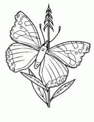 plansa de colorat animale fluturasi de colorat p30