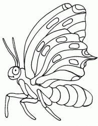 plansa de colorat animale fluturasi de colorat p32