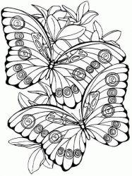plansa de colorat animale fluturasi de colorat p35