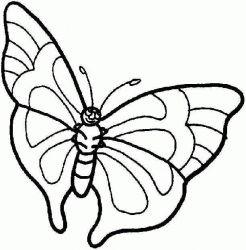 plansa de colorat animale fluturasi de colorat p42
