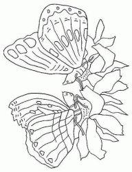 plansa de colorat animale fluturasi de colorat p44